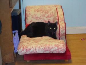 Someone got to enjoy Matilda's chaise lounge
