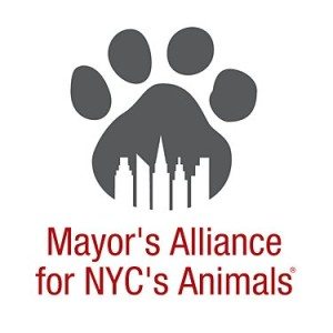 mayors alliance logo