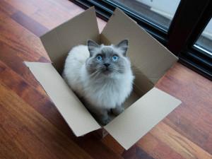 catinbox_paisley_by-kent-wang_4x3